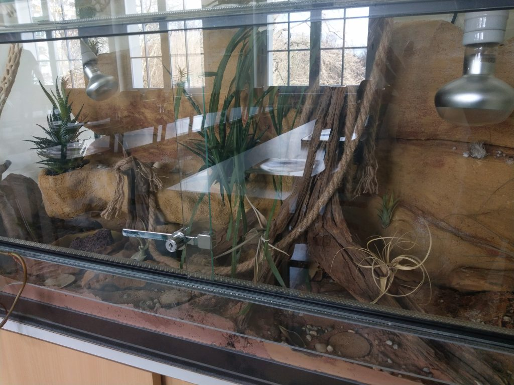 Leopardgecko-Terrarium am Goethe-Gymnasium Chemnitz