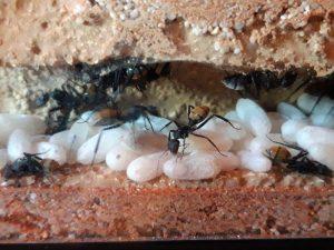 Ameisen im Vivarium der Regionalen Schule Woldegk