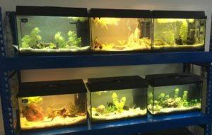 Einblick in den Aquarienraum am Gymnasium Lerchenfeld