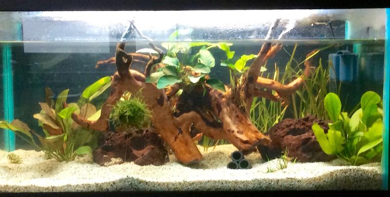 Aquarium für Süßwassergarnelen